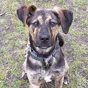 One to one dog training Rocky sitting