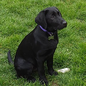 Puppy classes Albas puppy